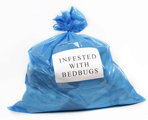 Infested With Bed Bugs