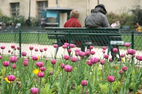 People Sitting on a Bench in Front of Flowers